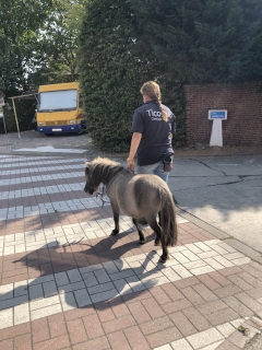 Poney Guide - Belgian Experimental Program - Poney Guide